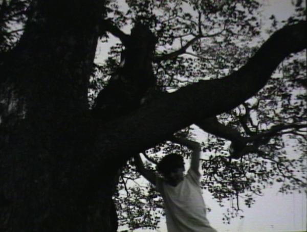 16mm_tree.jpg