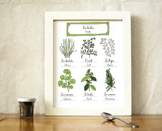 Herbs Kitchen Art 8x10 art print by  GeraldineAdams