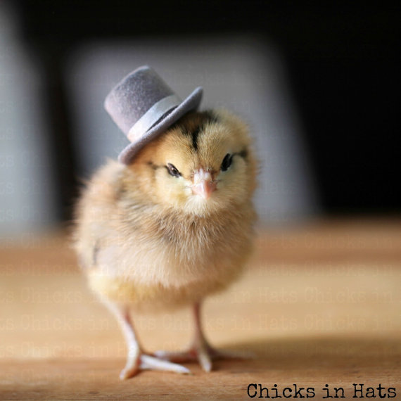 Note Card Chick in A Top Hat by   chicksinhats