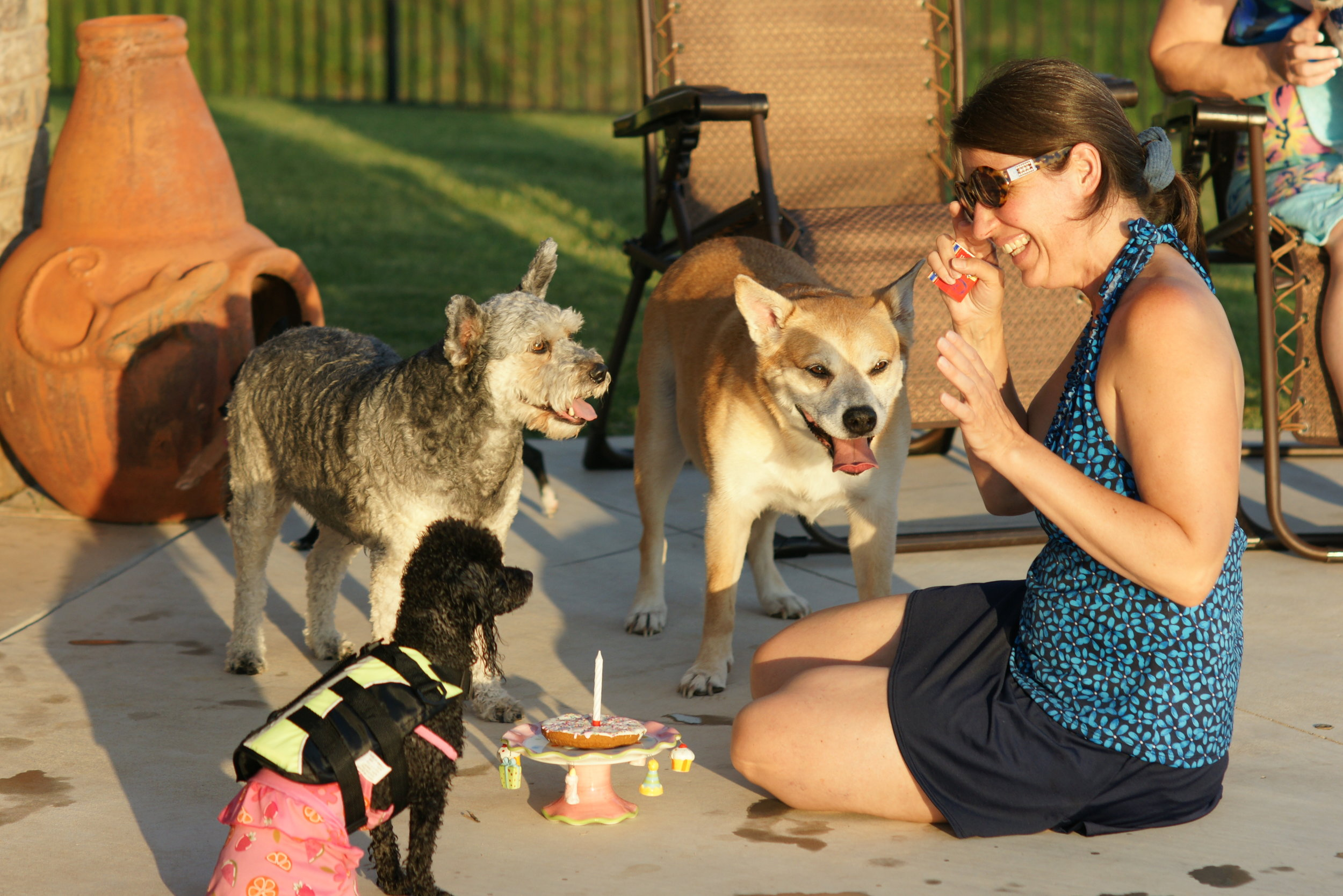 Celebrating Leo's birthday, with a pool pawty, many moons ago! Leo has since crossed over, (middle) along with his adopted sister Sabrina, the blond bombshell to the right, and little Miss Grace is still with me!