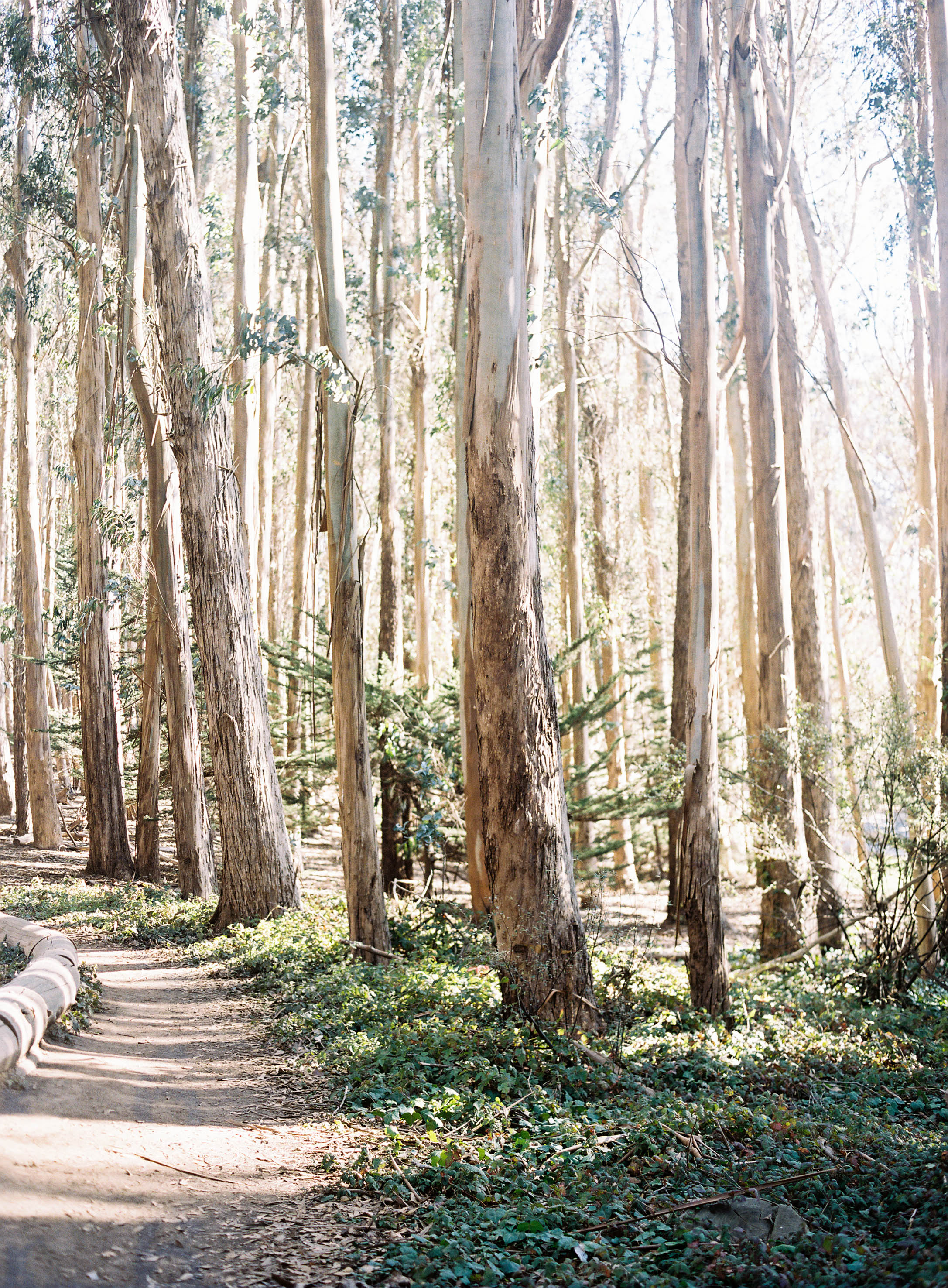 Meghan Mehan Photography - Fine Art Film Photography - California | San Francisco | Napa | Sonoma | Carmel | Big Sur | Santa Barbara | Nashville 048.jpg