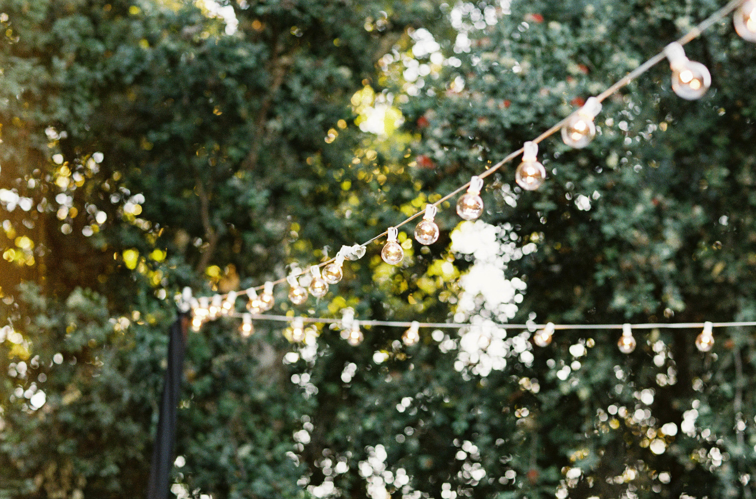 Meghan Mehan Photography - Fine Art Film Photography - California | San Francisco | Napa | Sonoma | Carmel | Big Sur | Santa Barbara | Nashville 030.jpg