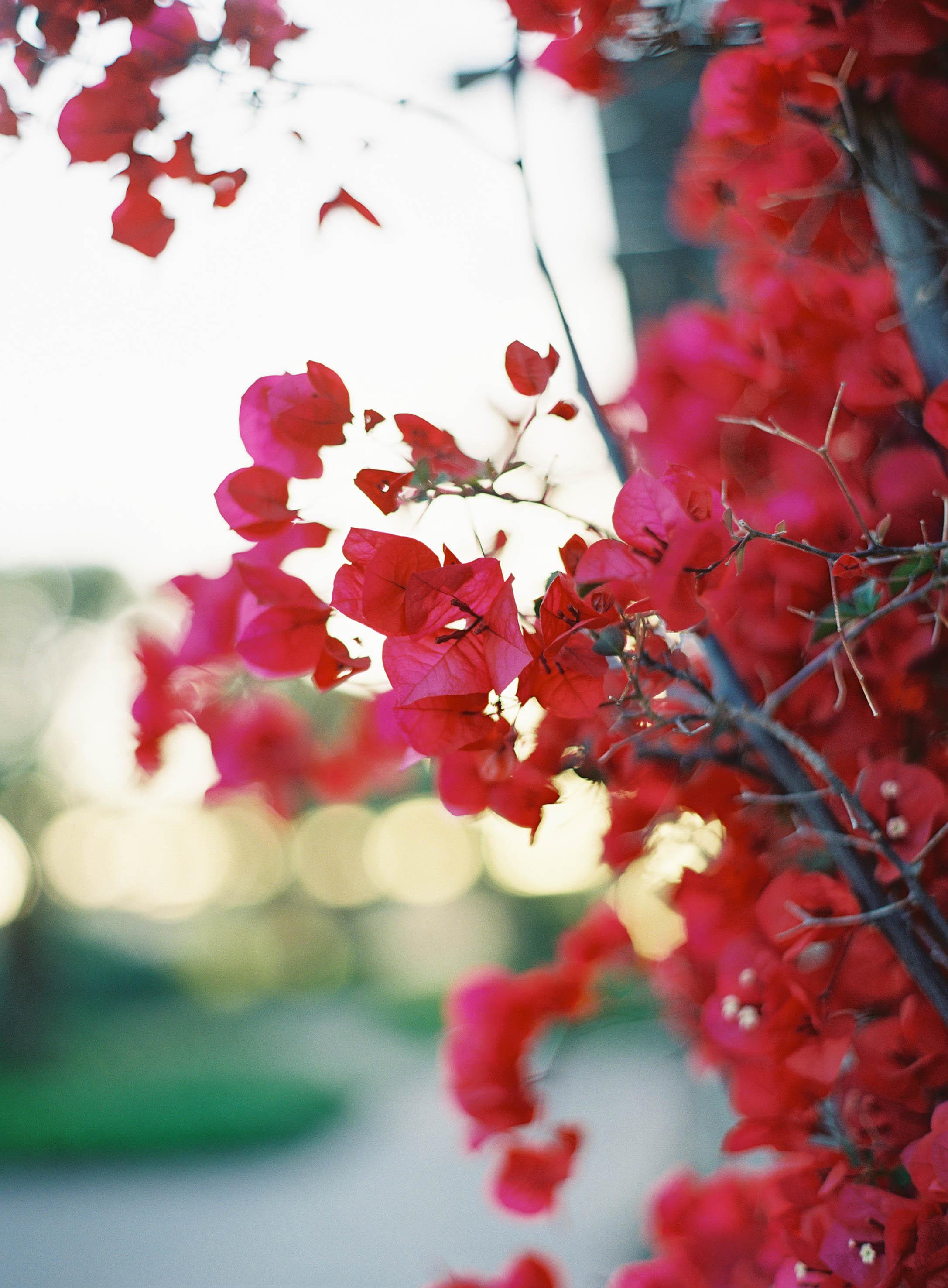 Meghan Mehan Photography - Fine Art Film Photographer   California   San Francisco   Napa   Sonoma   Santa Barbara   Rancho Palos Verdes - 003.jpg