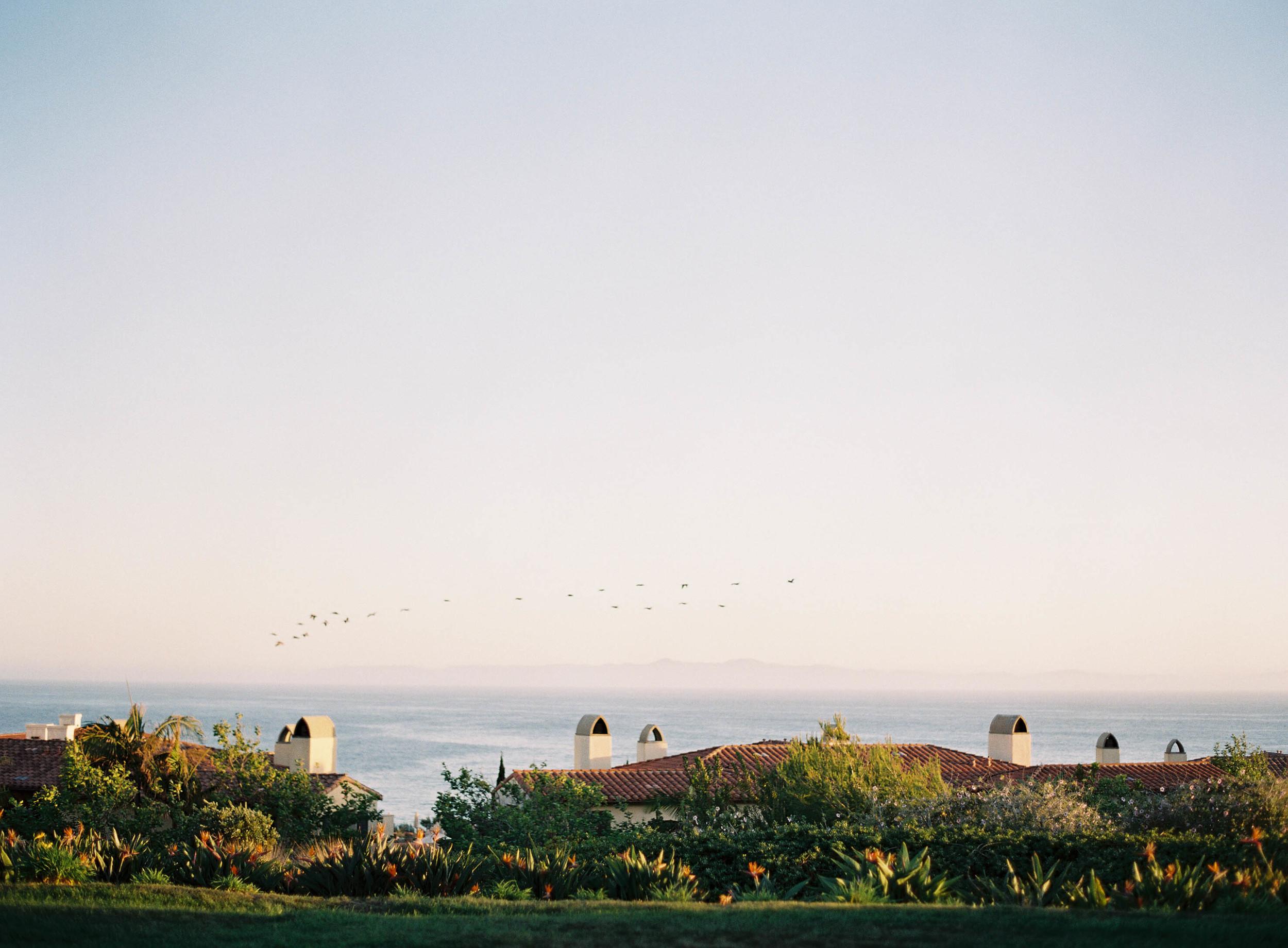 Meghan Mehan Photography - Fine Art Film Photographer   California   San Francisco   Napa   Sonoma   Santa Barbara   Rancho Palos Verdes - 004.jpg