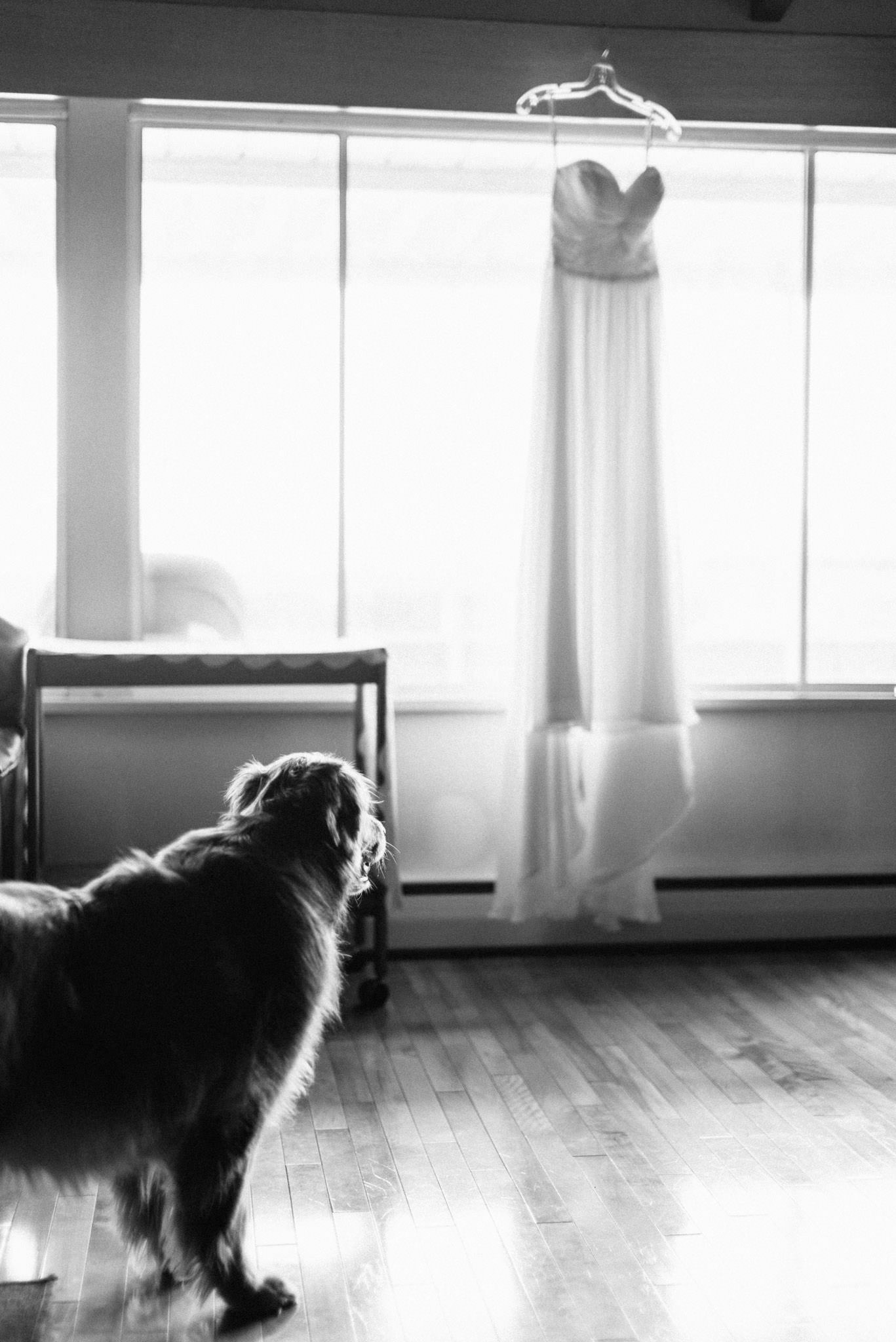 Vancouver wedding photography - pets