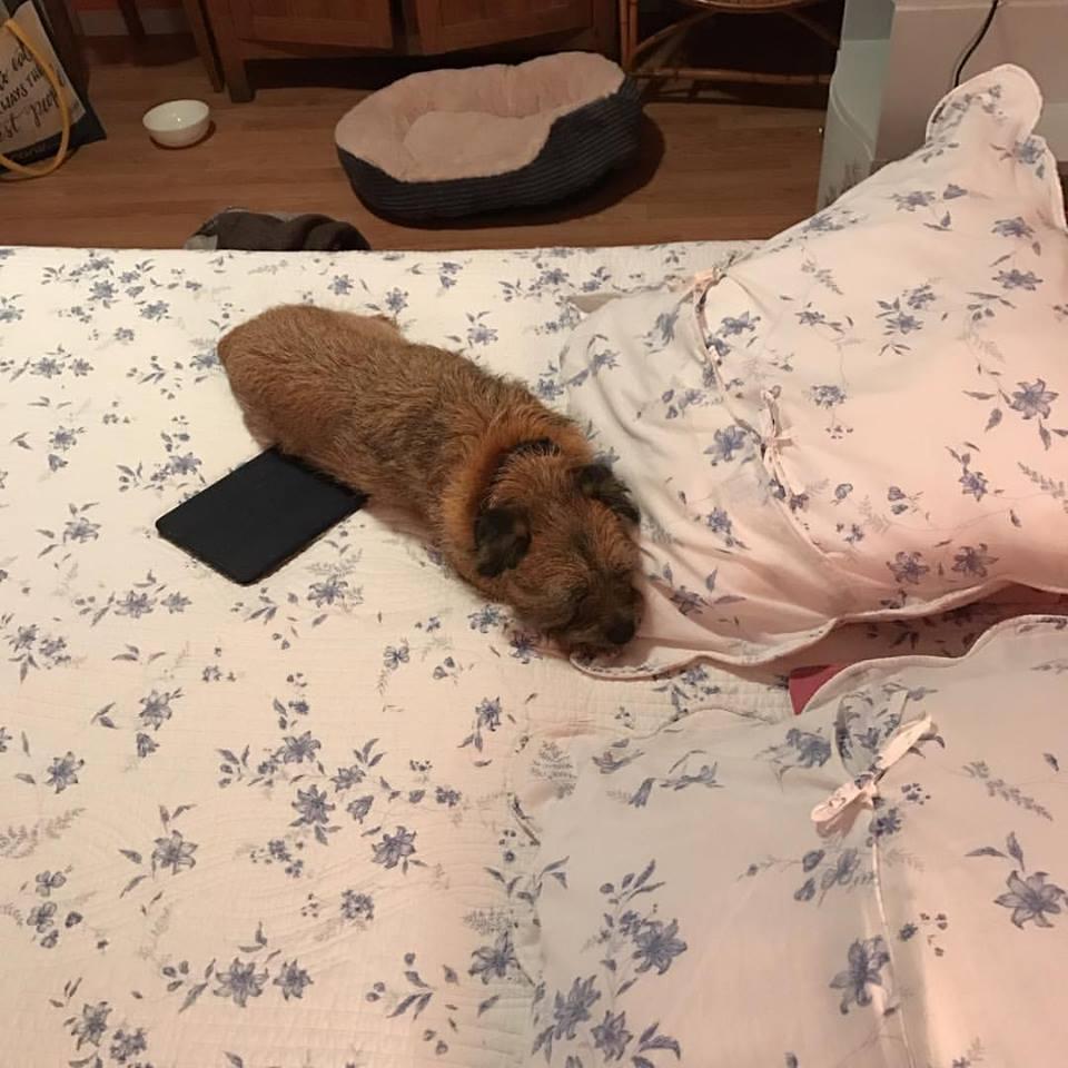 Twig on Bed.jpg