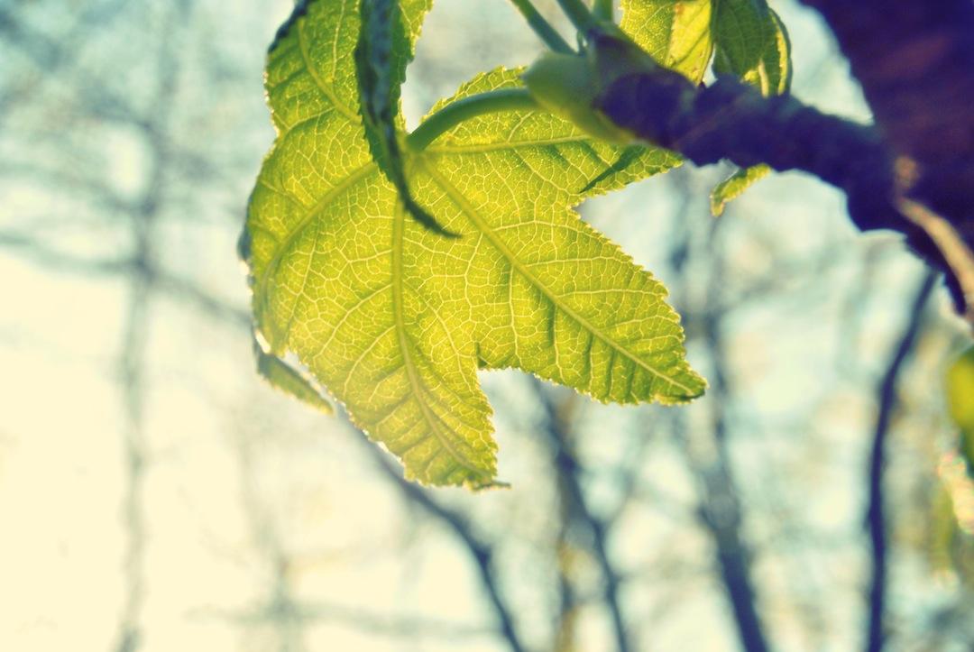 leaf growth.jpg