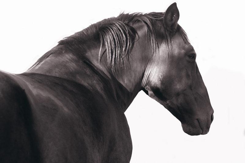 horse-sforrest-800x533.jpg