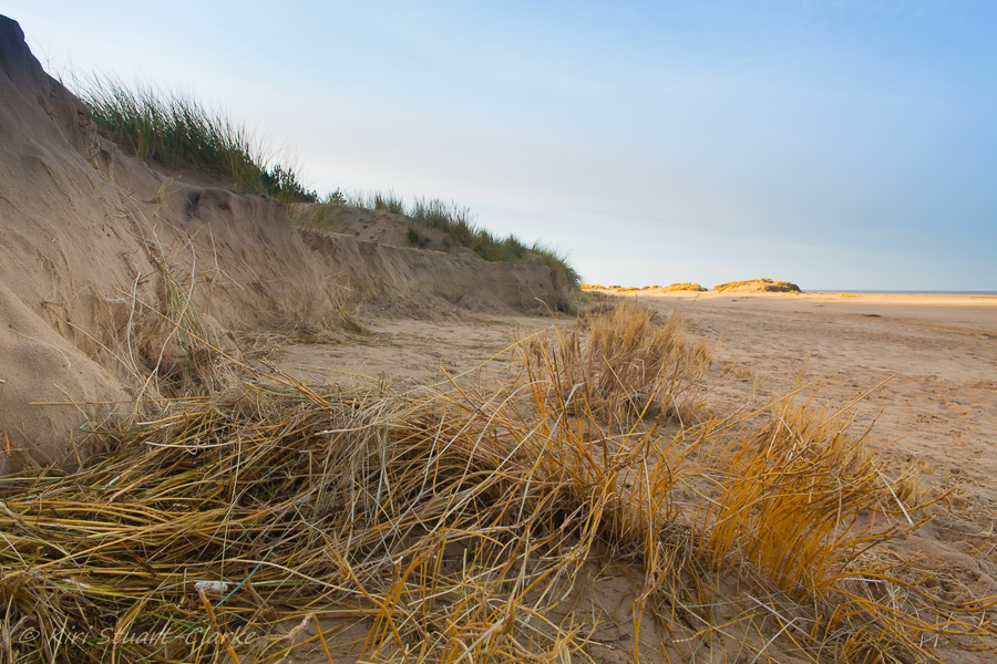 6-Exposed dune grass roots.jpg