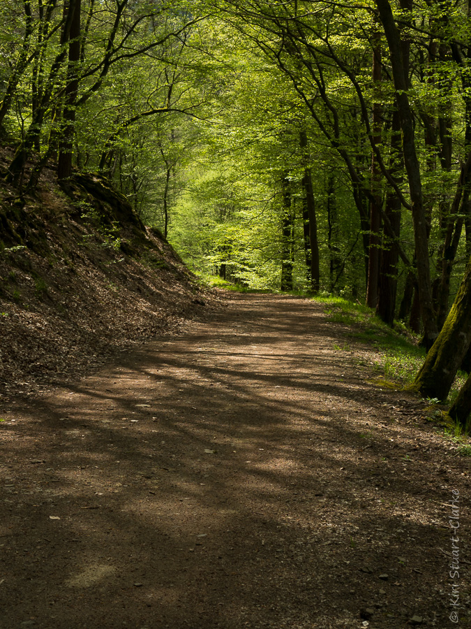 An enticing dappled woodland trail on the Lieserpfad hiking route