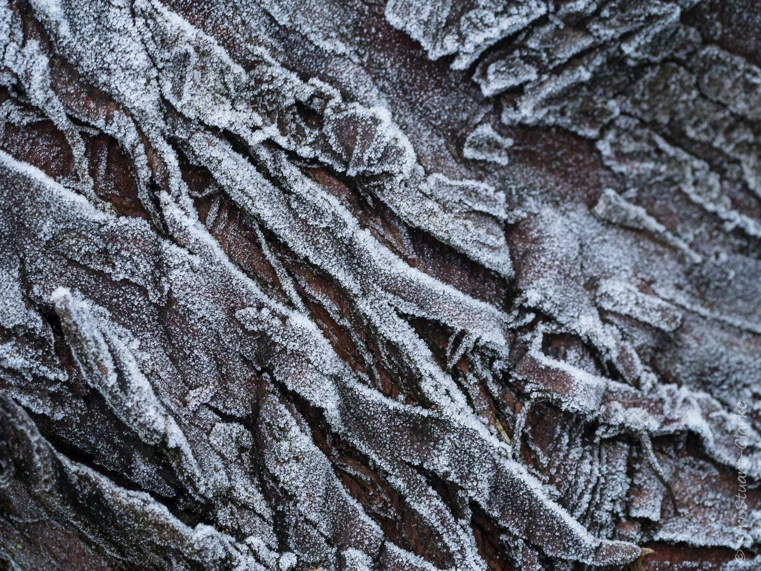 Bark covered in white frost