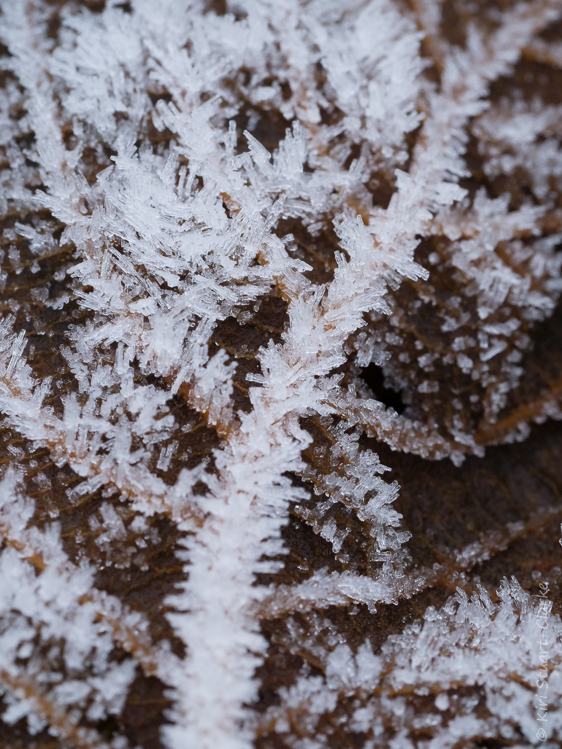 The crystalline nature of hoar frost close up