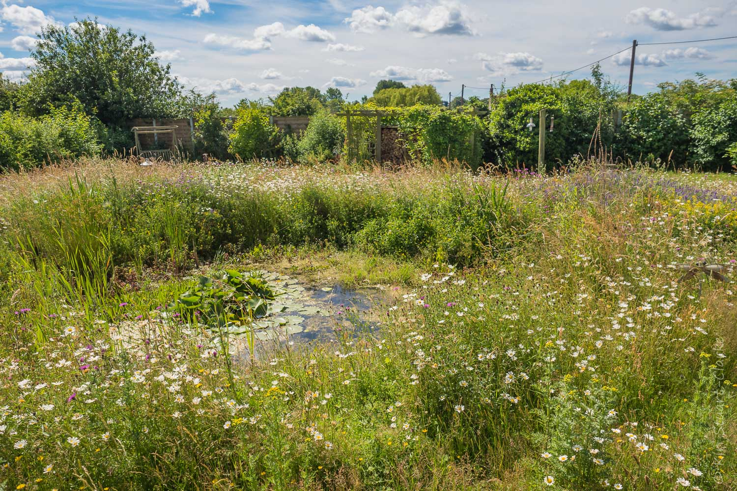 Nar Cottage wildlife pond as it is today, rich in aquatic and marginal vegetation and surrounded by a native wildflower meadow (June 2017)