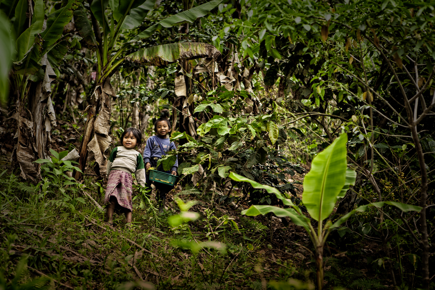 Title: COFFEE BABIES  Location: Santa Avelina, Guatemala  Date: March 2013