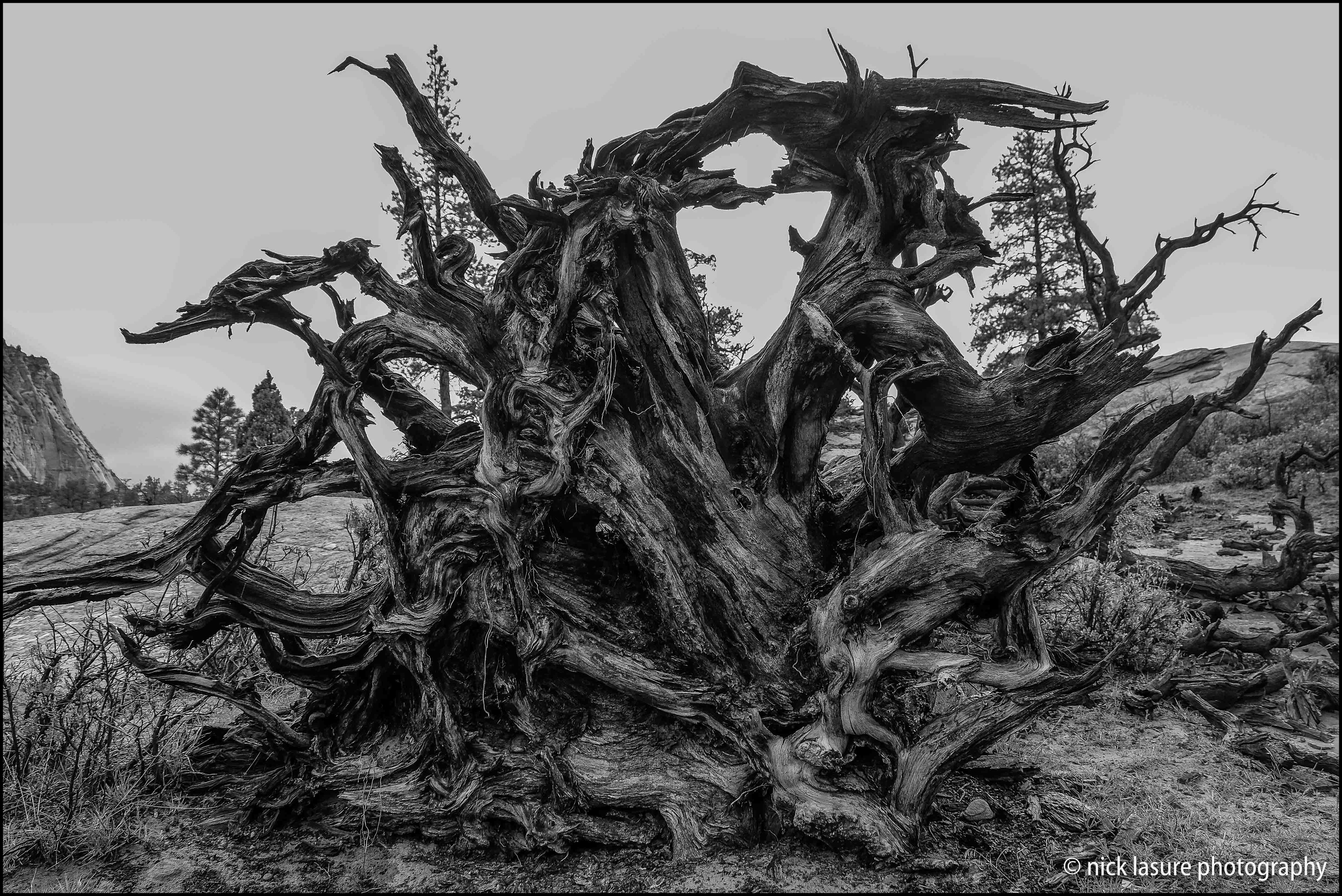 The roots of this very old fallen tree caught my eye - Fuji X-T1