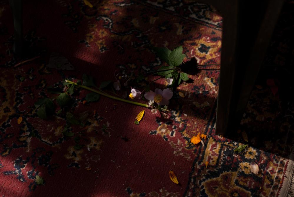 cut_flowers_01C.jpg