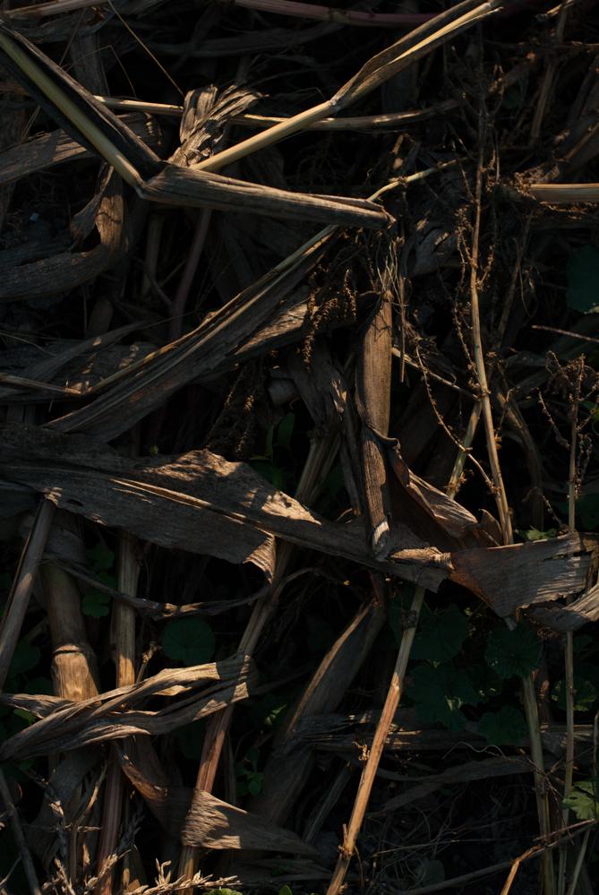 corn_02C.jpg