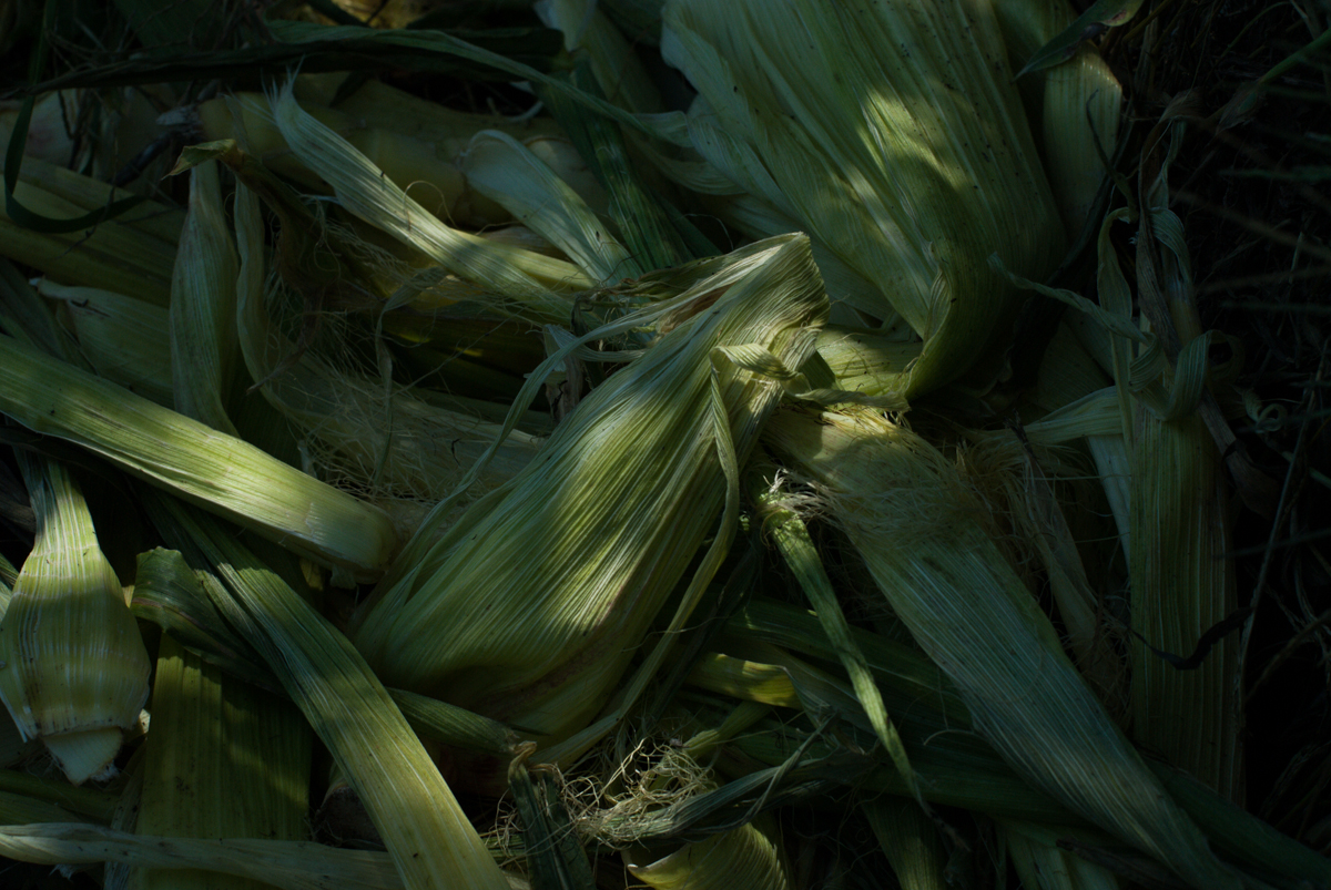 corn_husks_2016.jpg