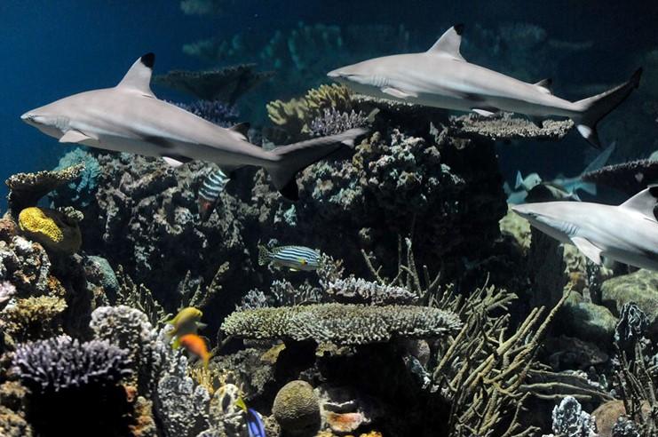 Black Tip Reef 1.jpg