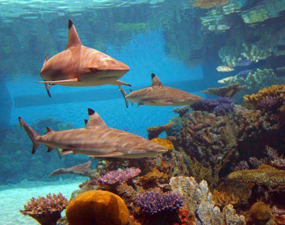 Black Tip Reef 4.jpg