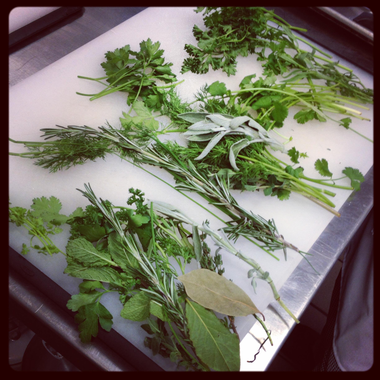 Herb Identification