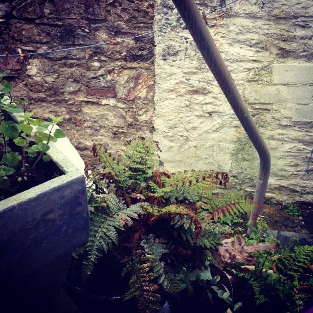 #garden #view #refuel #summertime #goodtunes #happydays