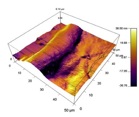3D rendering of topography of a fibroblast. Fibroblasts are one of the major producers of extracellular matrix proteins.