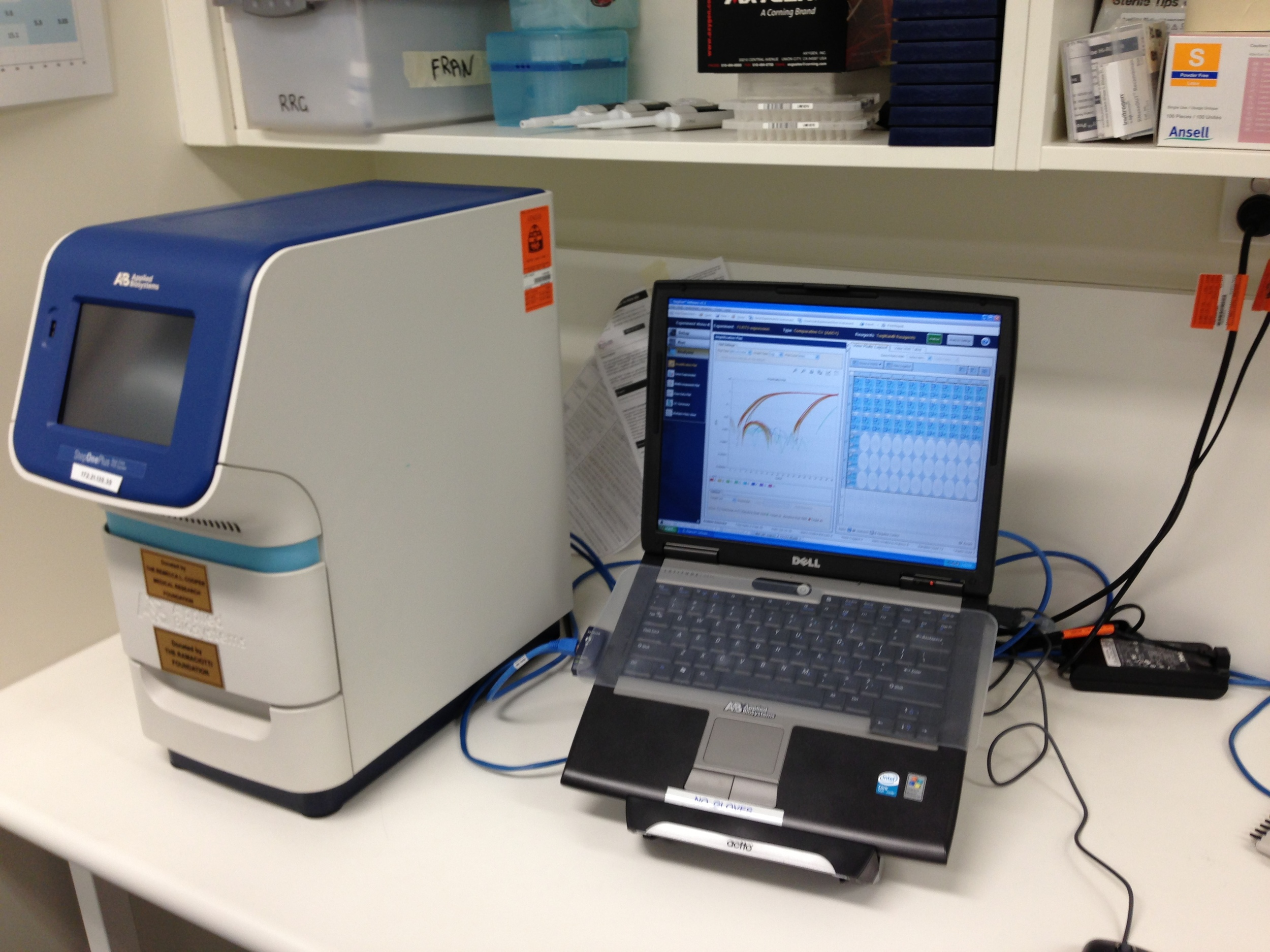 Real Time Quantitative PCR (qPCR)
