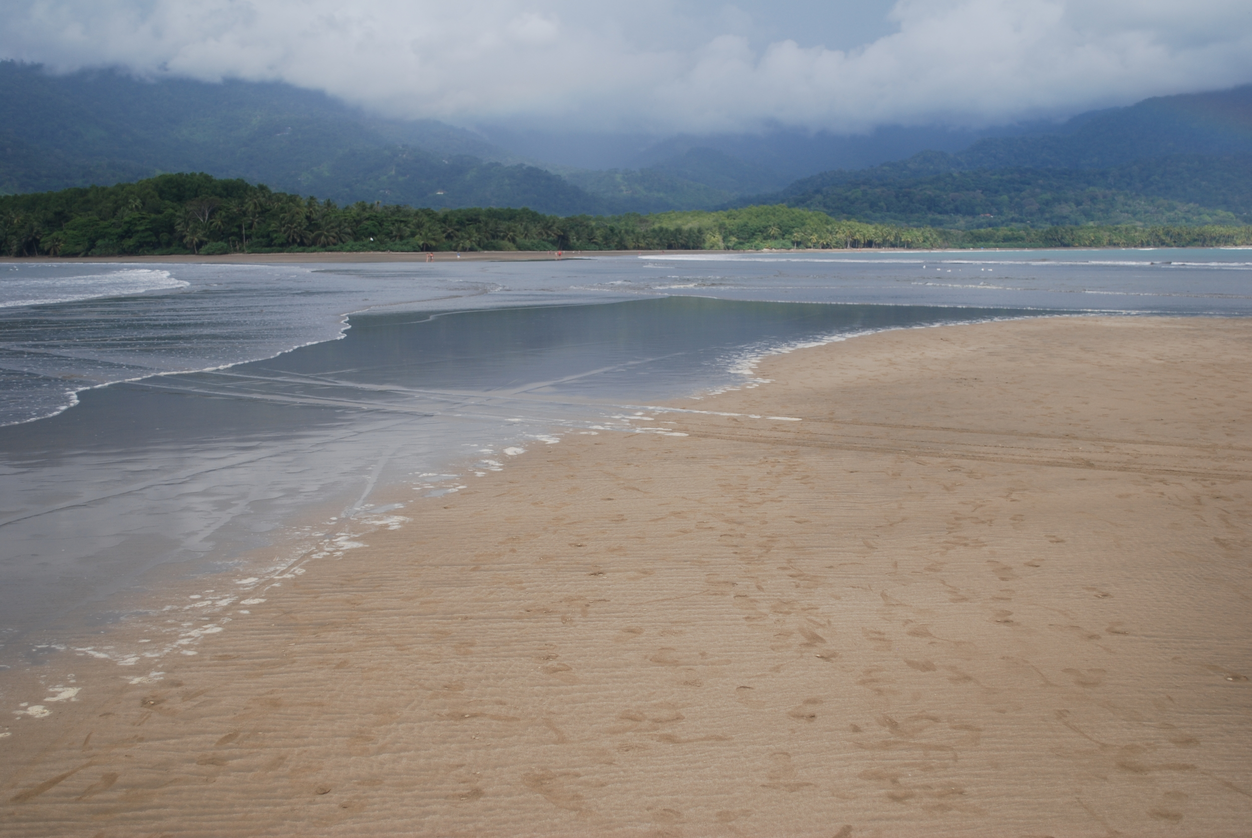 More from the Whale Tail/Marino Ballena