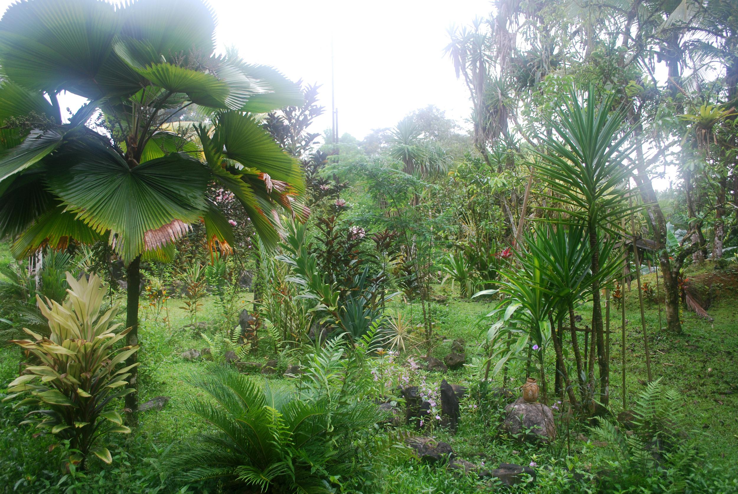 Jungle garden at La Casa del Arbol, a treehouse lodge near Piedras Blancas.