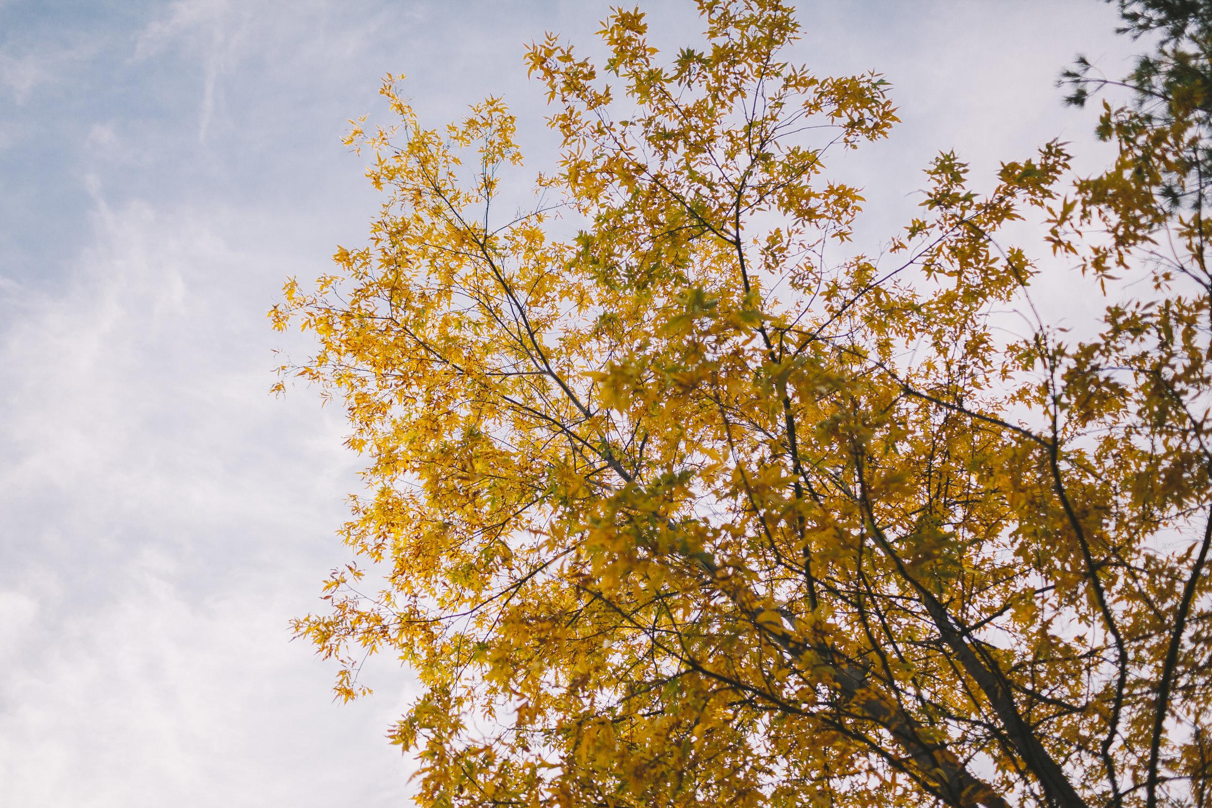orange coloured leaves of fall