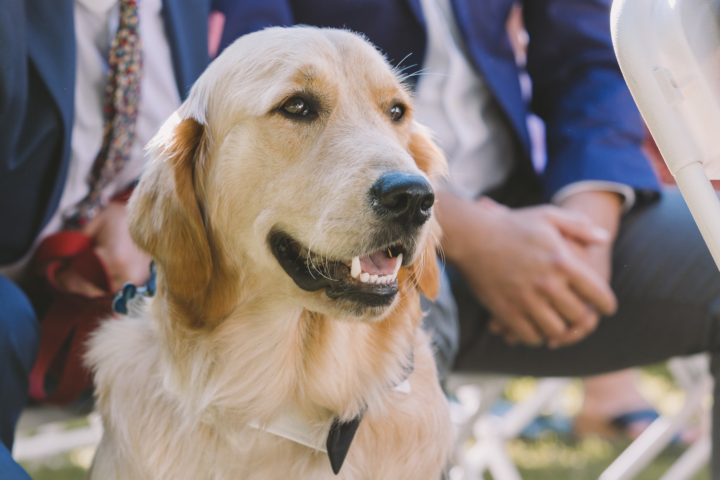 Wedding Dog Attending a Ceremony at Trillium Resort and Spa