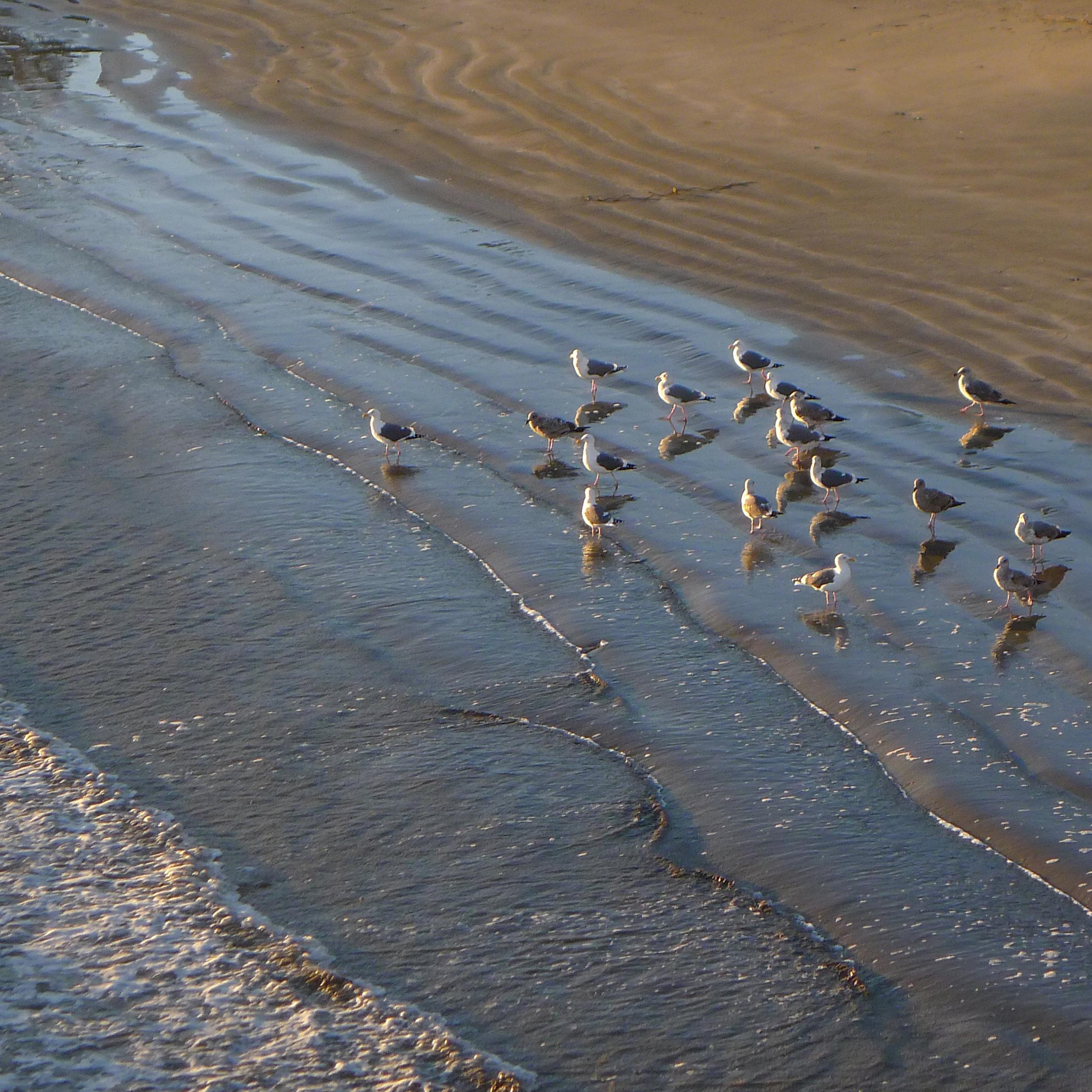 Birds & Tide Sq.jpg