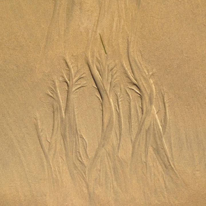 Seaweed and Sand Sq.jpg
