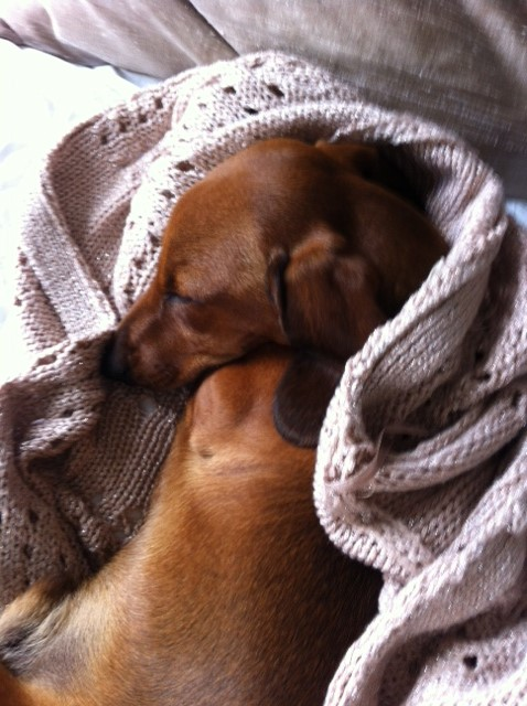 Hudson sleeping cardigan.JPG