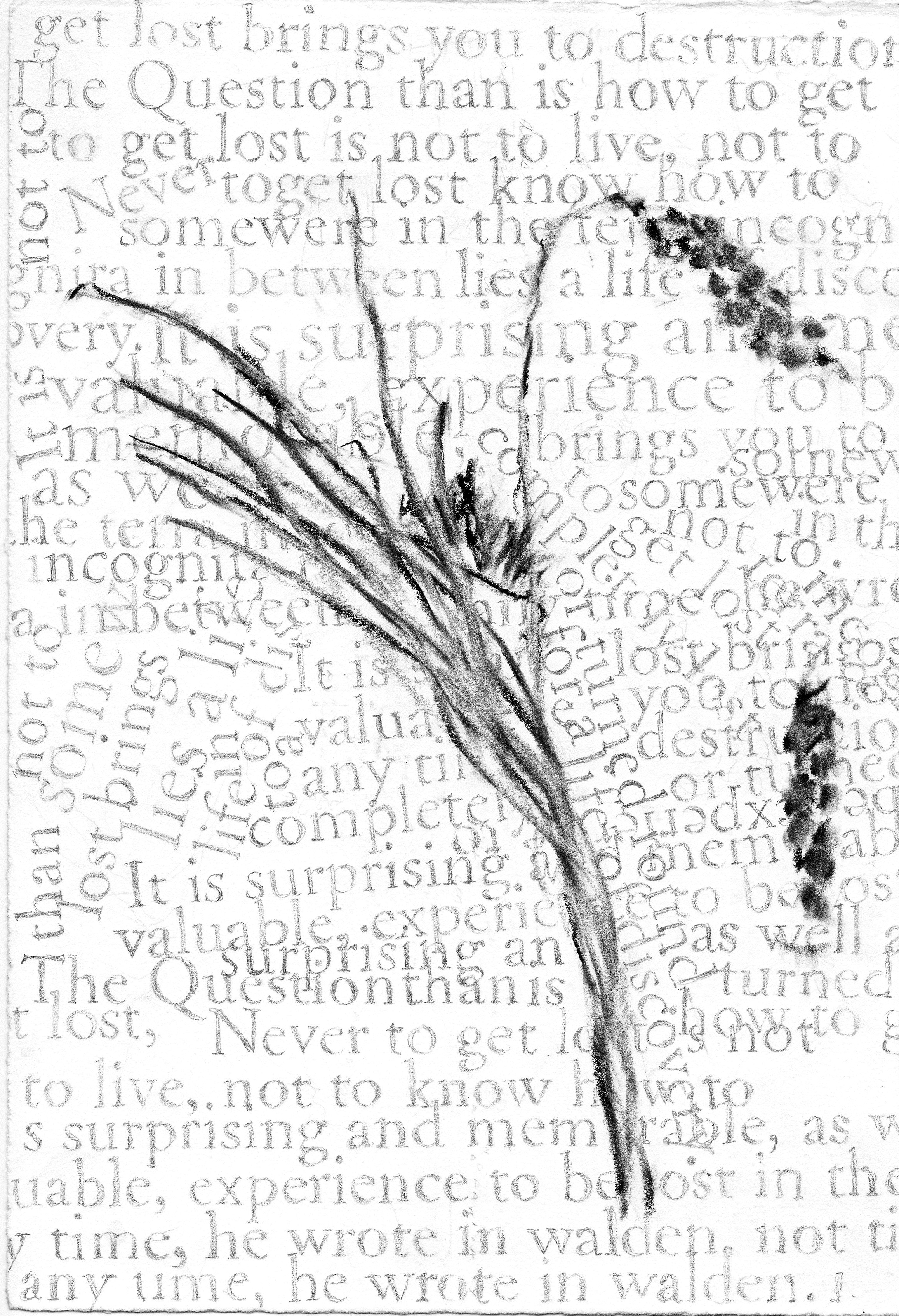 drawing words.jpg