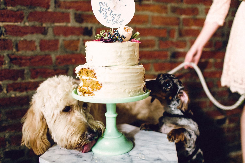 dog wedding_9.jpg