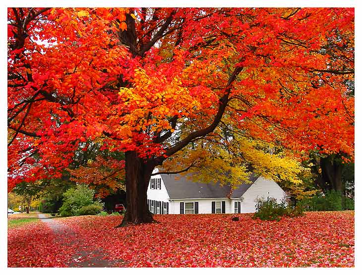 autumn-house.jpg