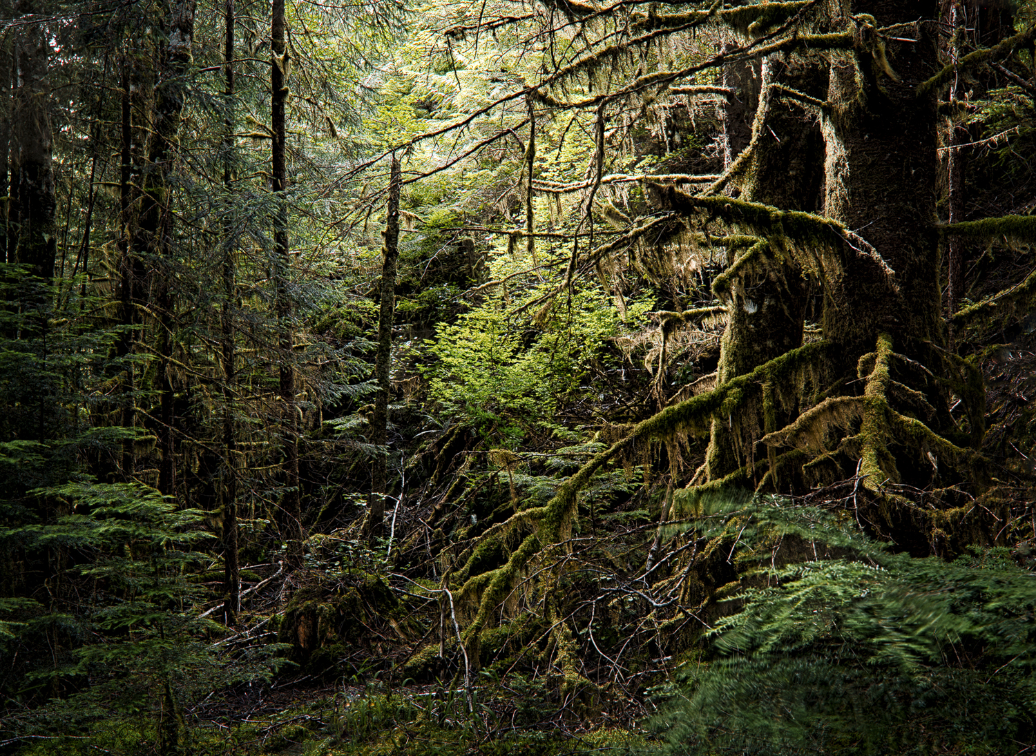 I always ponder the idea of how the native people managed to navigate though these forests