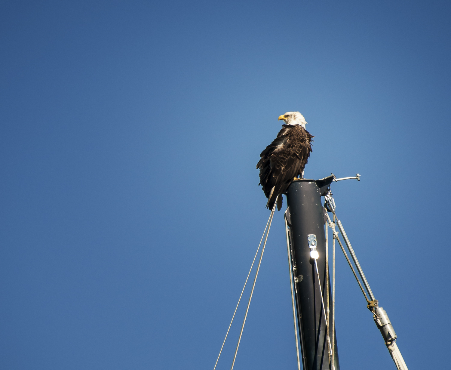 Shabby looking eagle on a shabby looking boat