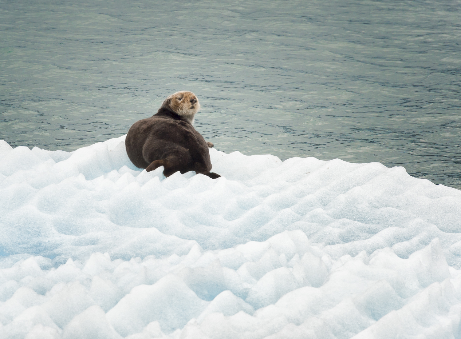 """The ice fields provide good """"critter watching"""""""