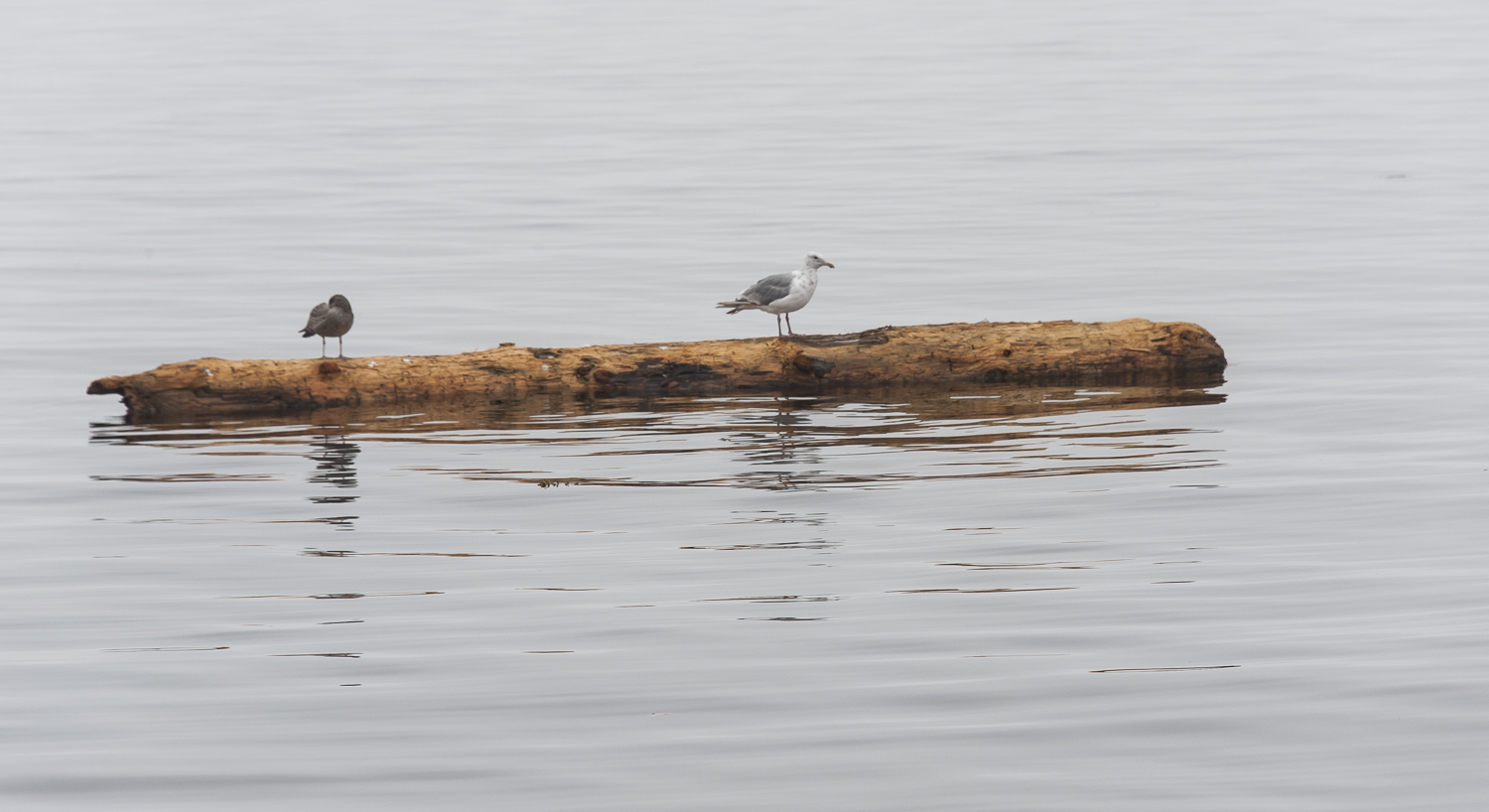 birds are a big help in spotting logs