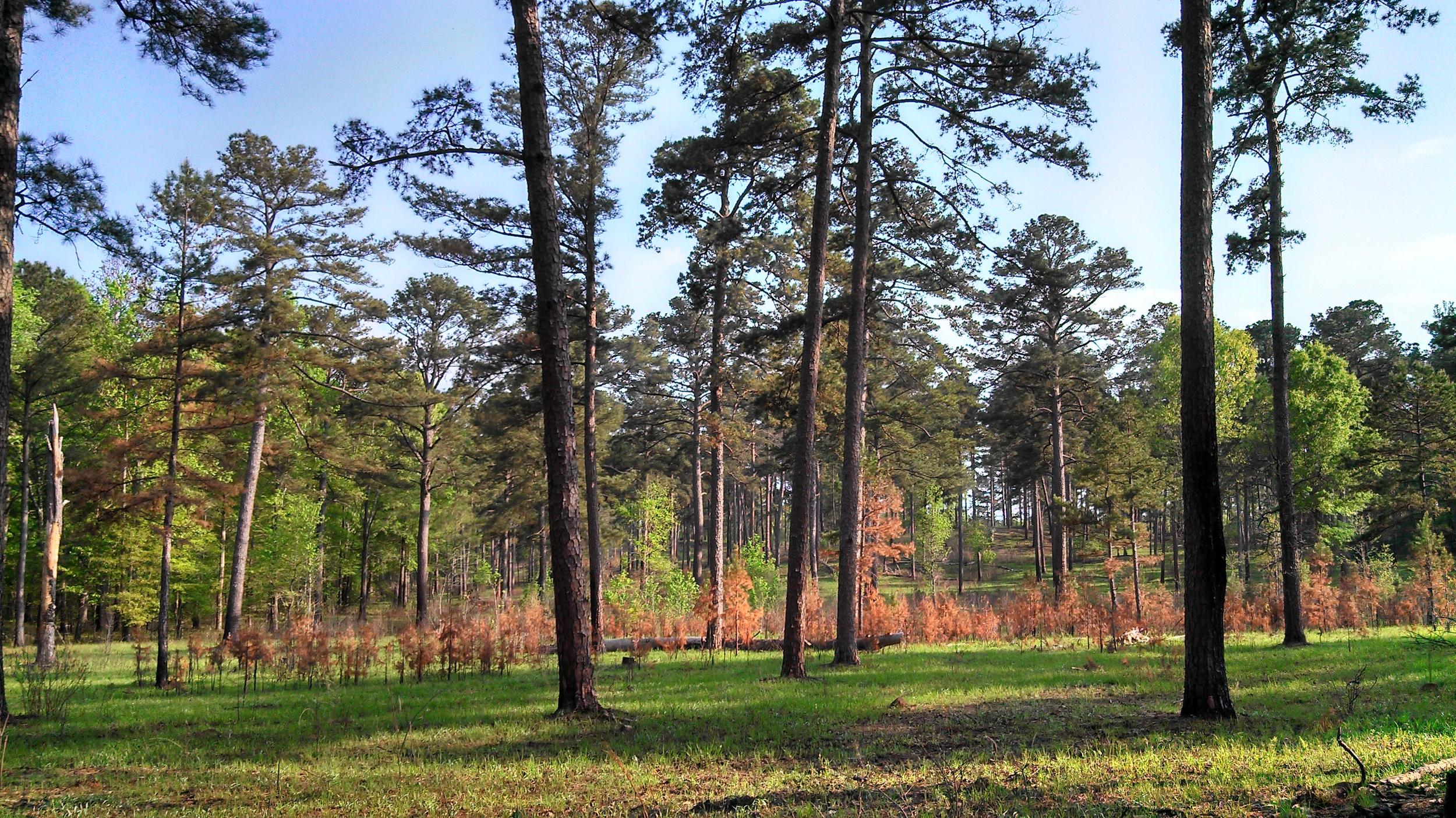 Sehoy Plantation, Bullock County, AL