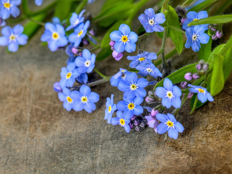 wildflowers_111562958.jpg