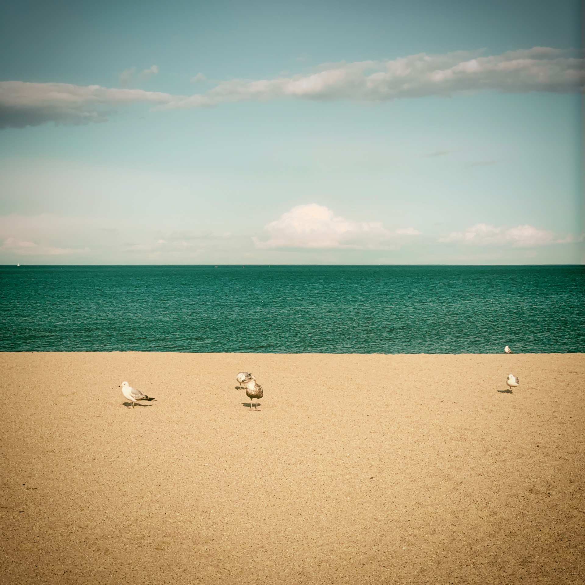 A Flock of Seagulls, Short Beach State Park, Stratford CT