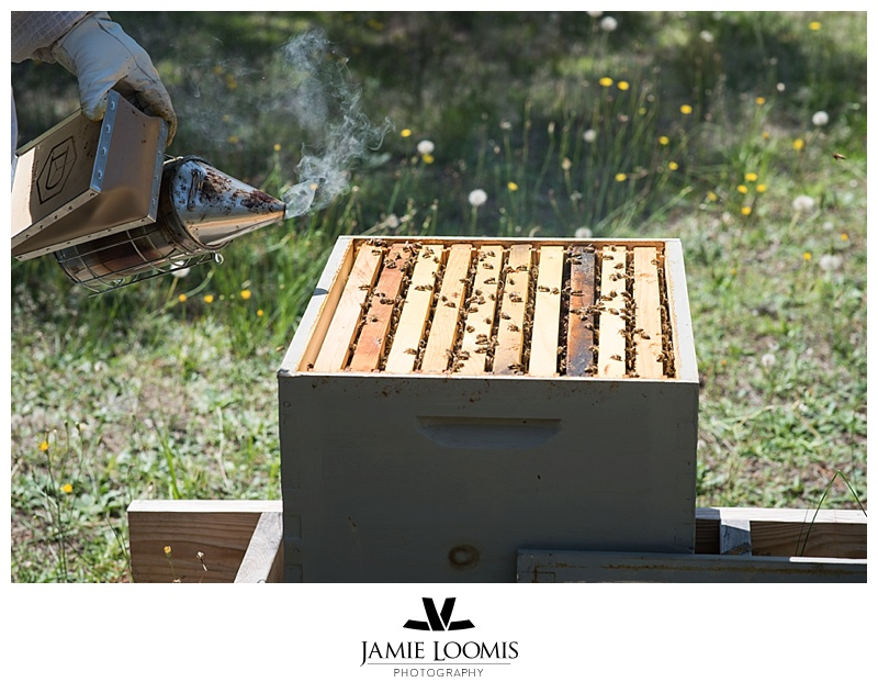 Brood Box - looking for queen.