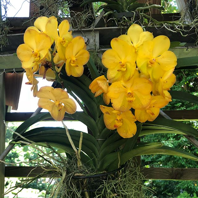 The orchids in Singapore are really beautiful. The colours, textures and shapes with the very green background of a Singapore garden, would make a beautiful fabric.