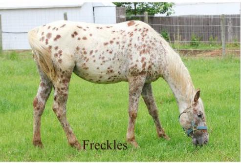 Freckles eating.png