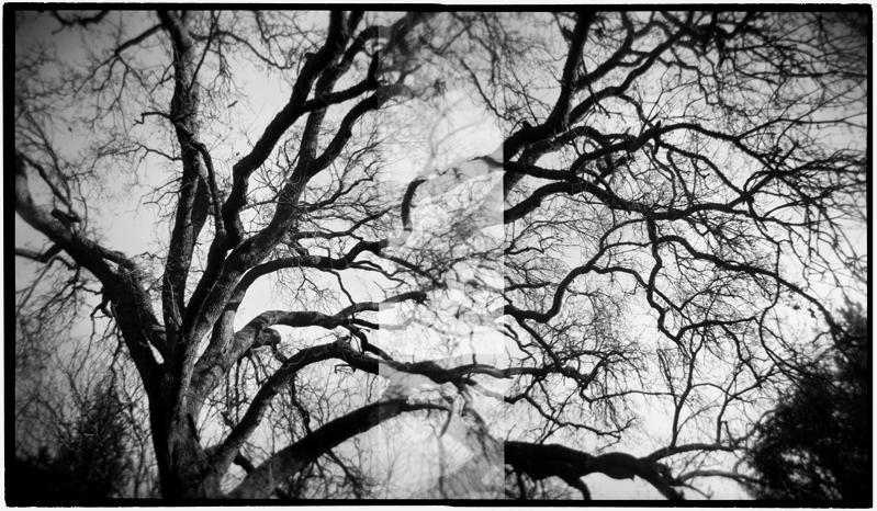 OakTree_Panoramic.jpg