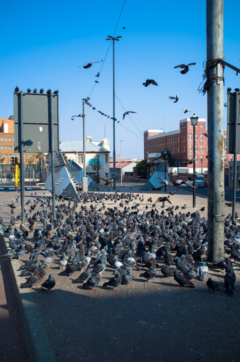 Pigeon Square (Ferreirasdorp)